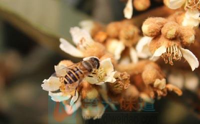 枇杷蜂蜜的功效简介——第六味道